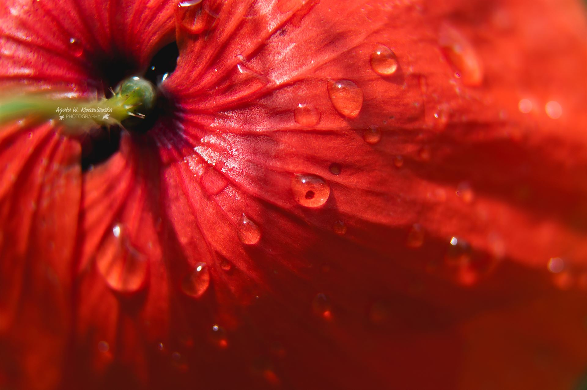Droplets -  by Agata W. Kwasniewska Photography