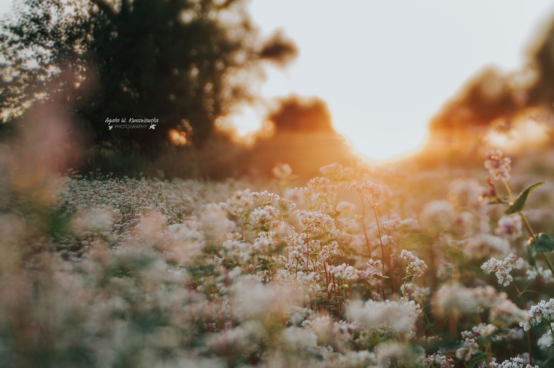 Dreamy light -  by Agata W. Kwasniewska Photography