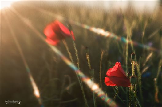 Flares over the poppies -